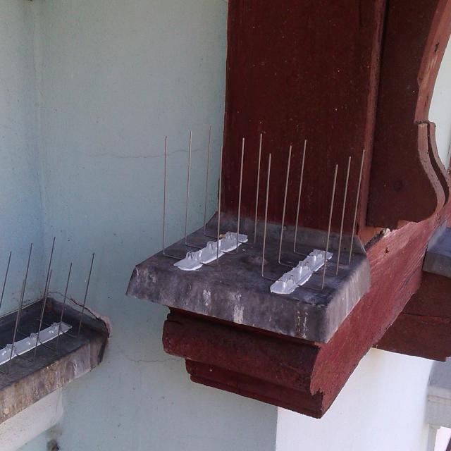 Instalace hrotů proti holubům Jablonec nad Nisou - RAPEL.CZ