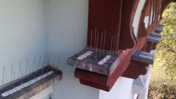 Ochrana budov od ptactva a hmyzu