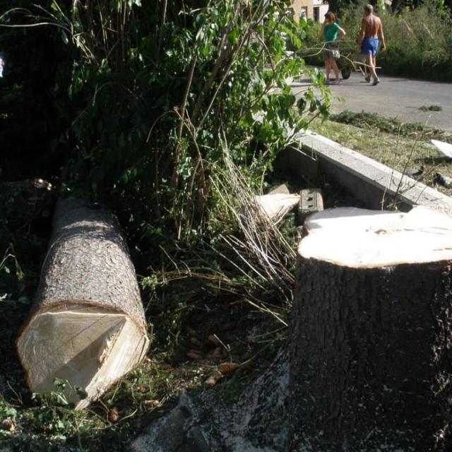 Odvoz dřeva - RAPEL.CZ