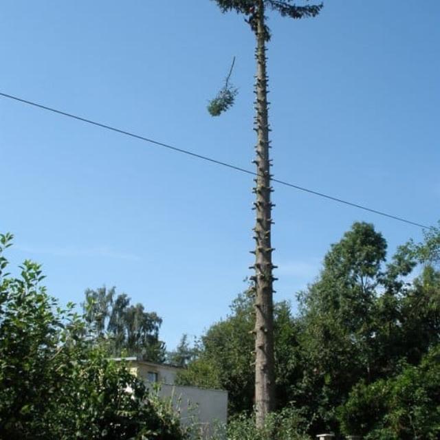Prořezání stromu Výškové práce Jablonec nad Nisou - RAPEL.CZ