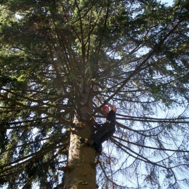 Prořezávání stromu z lana Jablonec nad Nisou - RAPEL.CZ