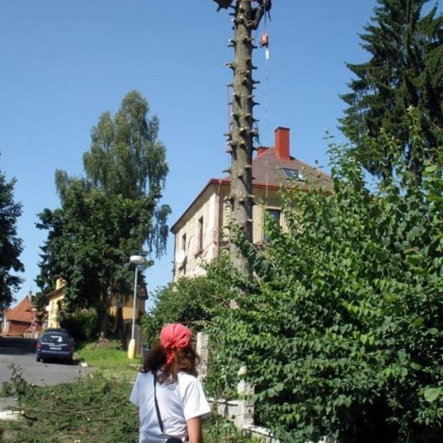 Rizikové kácení a prořezávání stromů Jablonec nad Nisou - RAPEL.CZ