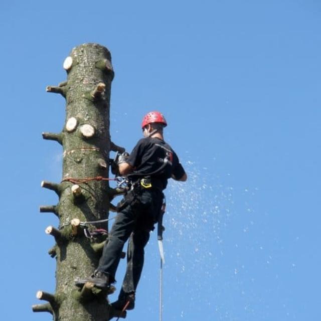 Rizikové kácení stromů Jablonec nad Nisou - RAPEL.CZ