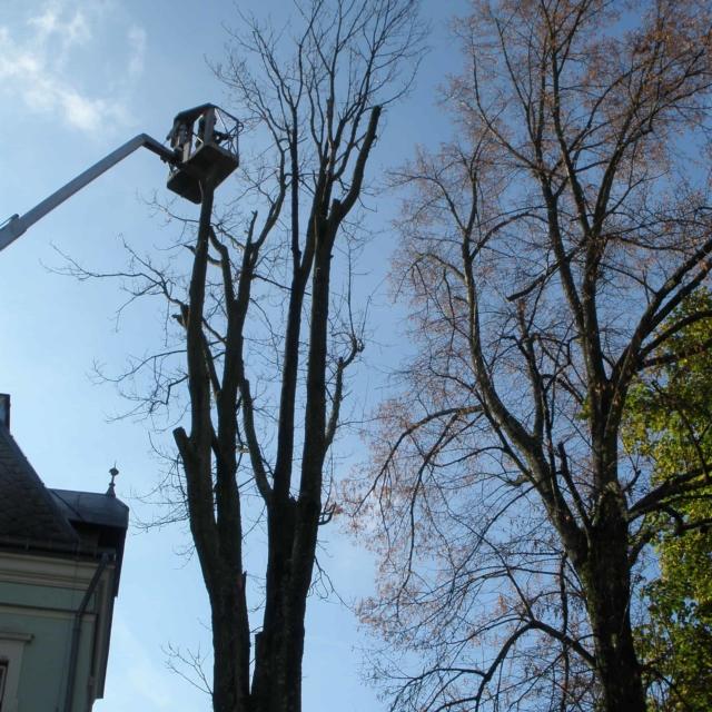 Rizikové kácení stromů z plošiny - RAPEL.CZ